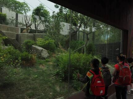 지난해 전면 개수한 서울동물원 표범 우리. 철창 같은 기존 우리보다 자연성을 높였고 표범의 복지를 고려했다. 이곳에 한국표범이 들어온다.