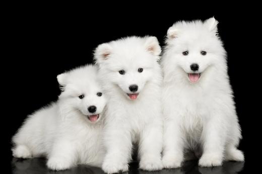 애완견, 반려견, 반려동물과 관련한 법적 소송이 늘고 있다(사진=포토리아)