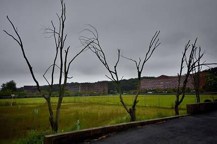 ⓒ시사IN 조남진 폐교 위기에 놓인 전북 남원시 서남대학교의 처참한 전경.관리되지 않은 나무들이 말라죽어 있다.
