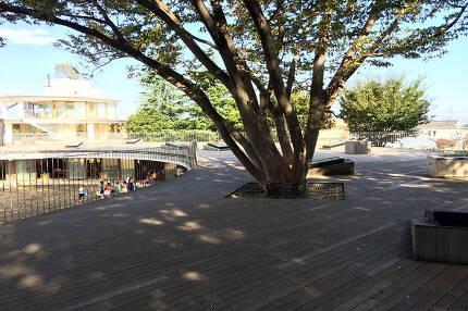 유치원 내부에서도 아이들이 느티나무를 오르내리면서 놀 수 있도록 했다. /와이그룹 제공