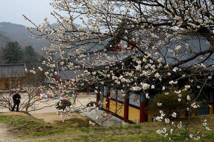 신라 경덕왕 원년인 742년에 개창한 태안사.