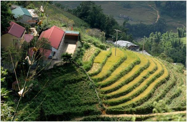 사파 트레킹은 절편처럼 쌓인 계단식 농경지와 흐몽(H'mong)과 짜오(Dzao) 등 소수 민족을 마중하러 가는 길이다.