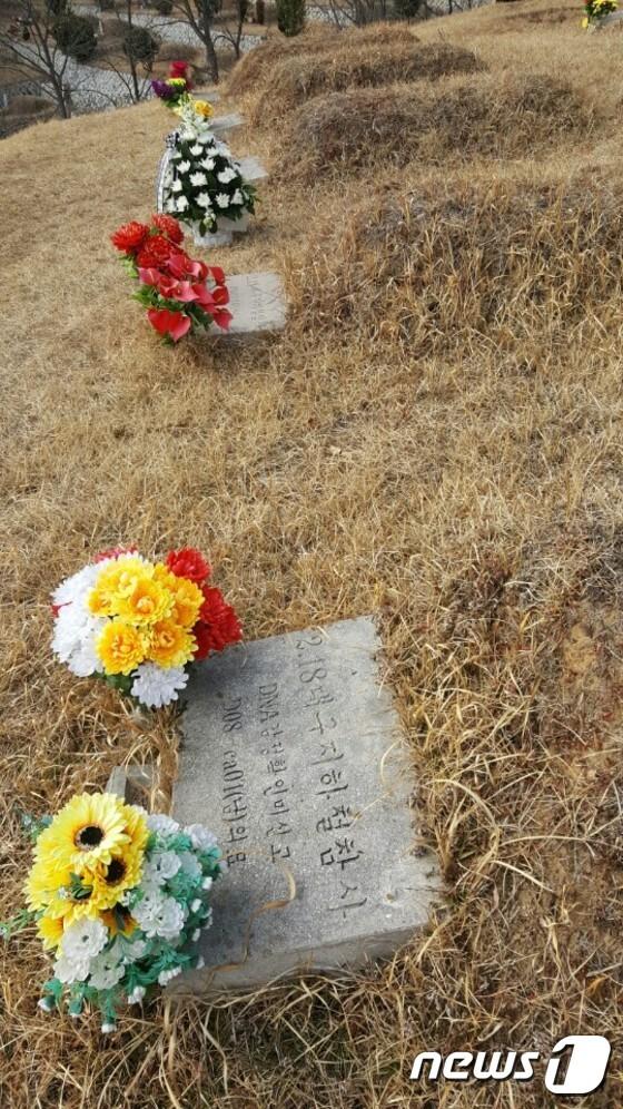 14년째 신원이 확인되지 않은 2.18 대구지하철 화재 참사 희생자 6명의 묘지에 꽃다발이 놓여있다./사진제공=2.18대구안전문화재단© News1