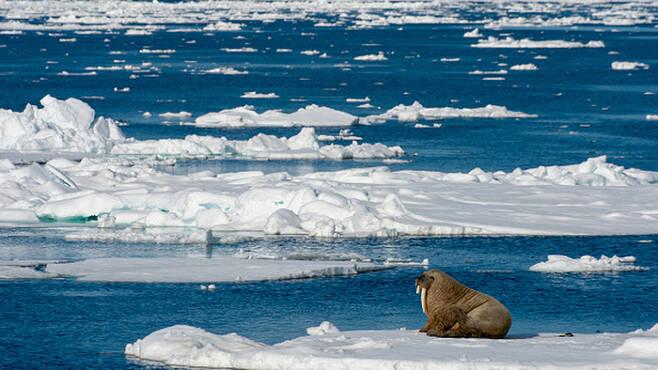 북극해 (사진=게티이미지/이매진스)