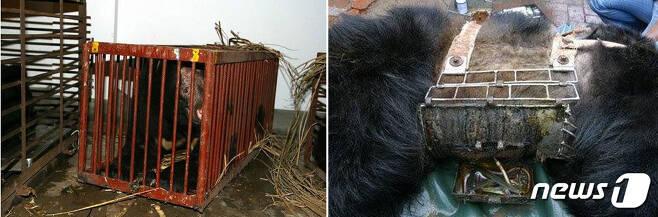 '크러시케이지'와 '금속 재킷'.(사진 애니멀스 아시아 파운데이션(Animals Asia Foundation) 제공)© News1