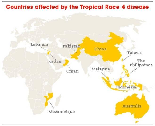 TR4 바나나 병 피해지역