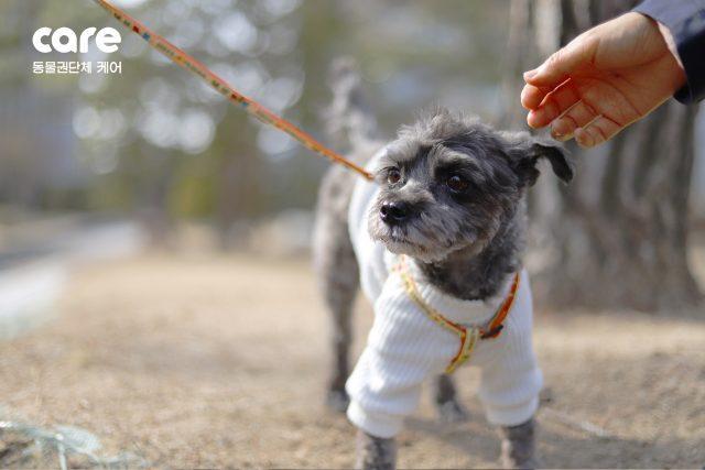'퍼스트 도그'의 산책 - 청와대 생활 7개월 만에 '친정'인 동물권단체 케어 사무국을 찾은 토리.