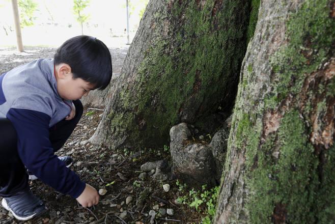 느티나무 밑에서 먹이를 물어 나르는 개미와 장난을 치고 있는 초등학생. 사진기를 든 나의 눈과 마주치자, 연둣빛 나뭇잎처럼 수줍게 웃음 지어 보인다. ⓒ이돈삼