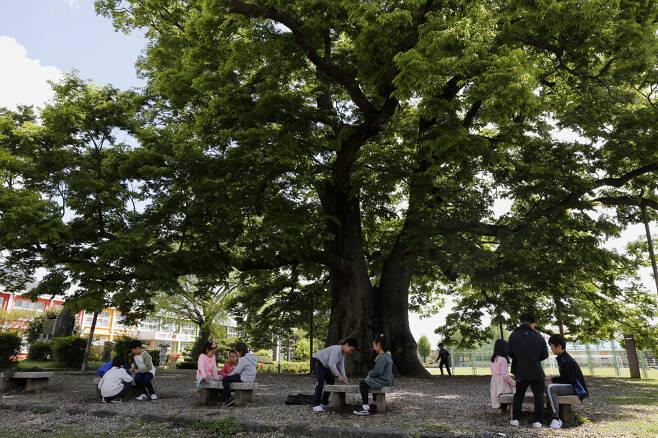 느티나무 숲그늘에서 쉬는 시간을 보내고 있는 한재초등학교 학생들. 나무와 함께 노는 어린 학생들의 얼굴에서 토실토실 여물어가는 동심이 엿보인다. ⓒ이돈삼