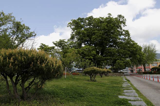 느티나무와 은행나무, 단풍나무 등이 한데 어우러진 담양 한재초등학교의 학교숲 전경. 제13회 아름다운 숲 전국대회에서 공존상을 받았다. ⓒ이돈삼