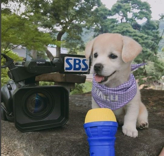 SNS 등에서 인기를 모이고 있는 강아지 인절미. SBS 제공