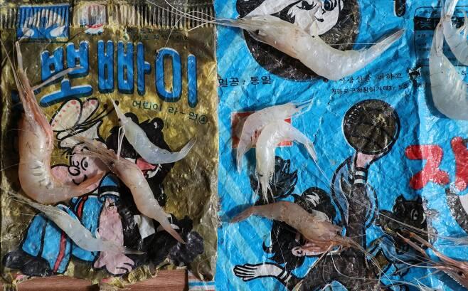 지난 11일 인천광역시 강화군 하점면 창우포구앞 바다에서 건져올린 그물에 40여 년 전에 버린 과자봉지 등이 담겨 있다. 강화/김봉규 선임기자 bong9@hani.co.kr