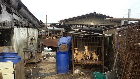 경기 평택에 있는 한 개농장은 음식물 폐기물처리신고도 하지 않고 개들에게 음식물쓰레기를 먹이다 적발됐다. 경기도 특별사법경찰단 제공.