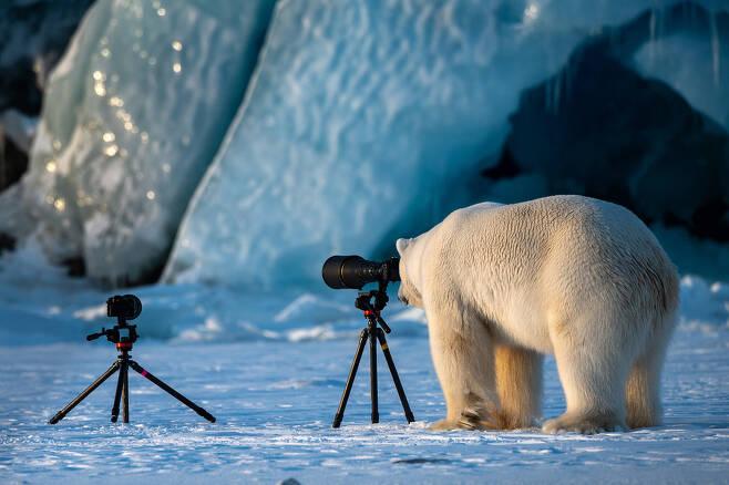 """너네 잘 찍고 있니? 노르웨이에 사는 북극곰 한 마리가 사진 작가들이 자리를 비운 사이 렌즈를 들여다보고 있다. 이 사진을 찍은 이스라엘의 Roie Galitz는 """"이 수컷 북극곰을 찍고 있었는데, 그가 갑자기 우리 쪽으로 빠르게 걸어왔다. 우리는 장비를 챙길 틈도 없이 설상차 뒤로 숨었는데 곰은 그저 렌즈를 지그시 들여다봤다. 북극곰은 야생사진작가로 직업을 고려해보고 있는 듯 했다""""고 설명했다."""