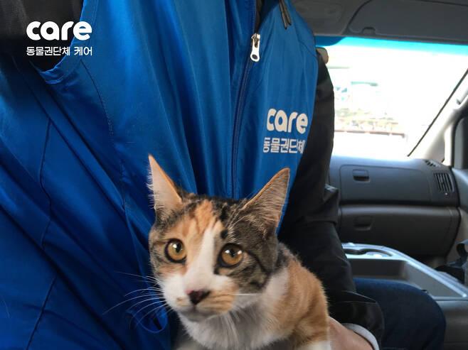 2018년 4월, 경기 시흥에서 구조된 사랑이. 학대자는 개인 방송을 하며 고양이를 때리고 살해 협박을 하는 등 '과시형 동물학대'를 일삼았다.