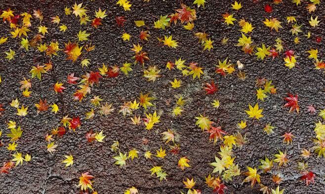 20181108 바닥에 내린 가을