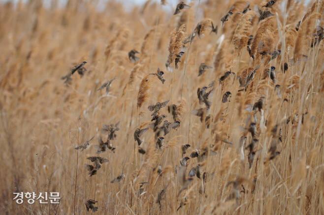 한국인에게 가장 친숙한 텃새 중 하나이자 도시, 농촌 어디서나 쉽게 볼 수 있는 참새의 모습. 국립공원연구원 제공.