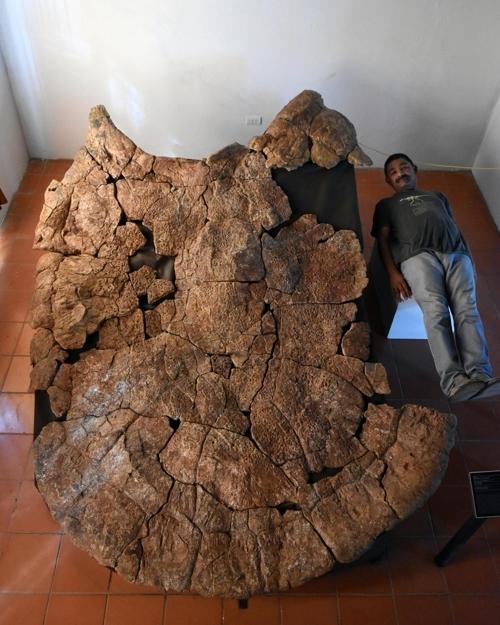 고생물학자 로돌포 산체스가 화석 크기를 나타내기 위해 누워있는 장면 [Edwin Cadena 제공]