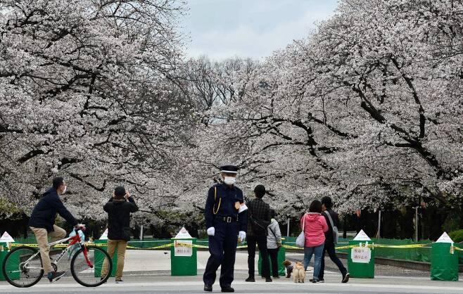 지난달말 일본 정부의 외출 자제 요청에도 벚꽃을 구경하러 인파가 공원과 거리로 나왔다. /AFPBBNews=뉴스1