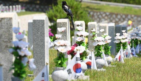 6.25전쟁 69주년을 하루 앞둔 24일 서울 동작구 국립서울현충원에서 까치 한 마리가 묘역에 올라있다. 사진=김범석 기자 /사진=fnDB