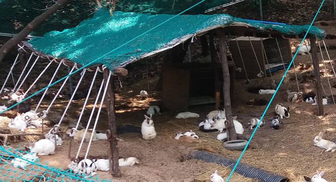 서울 동대문구 배봉산근린공원 내 토끼 사육장. 지난해 20마리였던 토끼들이 자체번식하며 개체수가 5배 이상 증가한 것으로 드러났다. 동물권단체 하이 제공
