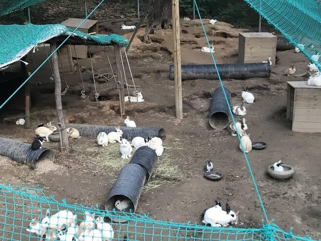 토끼들은 유일한 지붕 아래 오밀조밀 모여앉아 있거나, 그릇이 안 보일 정도로 밥그릇 주변에 모여있었다. 동물권단체 하이 제공
