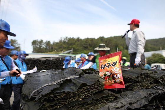 지난 1일 전남 완도군 금일도에서 열린 올해 첫 다시마 위판 현장. 농심은 너구리를 생산하기 위해 해마다 400t가량의 완도 다시마를 구매하고 있다. 중앙포토