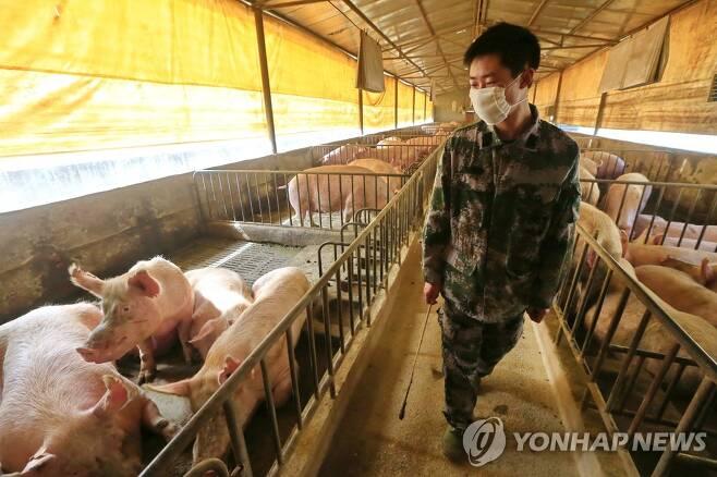 중국 쓰촨 지역의 돼지 농장. 기사와 무관한 사진 [EPA=연합뉴스]