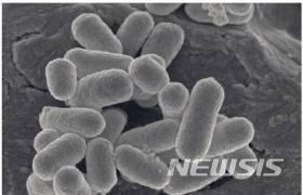 흑사병 원인균
