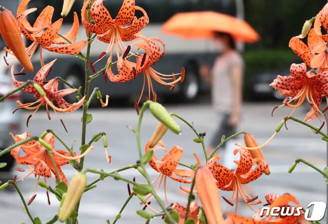 전국적으로 비가 내린 20일 오후 대전 서구 일원에서 시민이 우산을 쓰고 이동하고 있다. 2020.7.20/뉴스1 © News1 김기태 기자