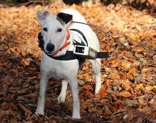 실험에 참여한 개. 개는 예리한 후각, 청각에 더해 지자기 감지 능력까지 보유하고 있을지 모른다. 베네딕토바 외 (2020) '이라이프' 제공