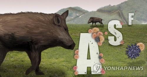 ASF 바이러스 매개체인 야생 멧돼지 (PG) [권도윤 제작] 사진합성·일러스트