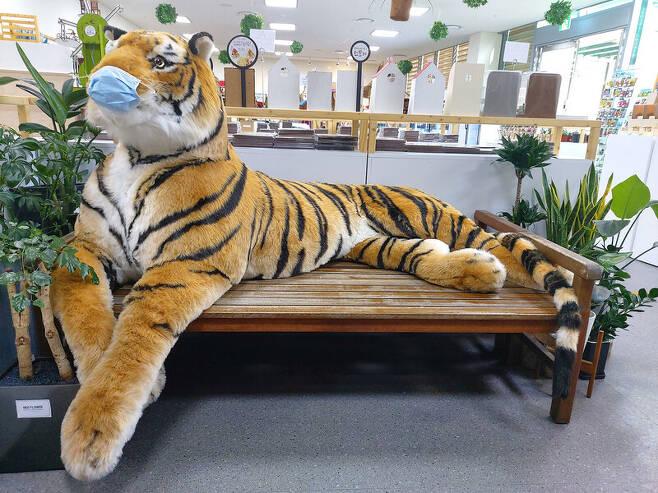 국립 백두대간 수목원 기념품 가게에 전시한 호랑이 인형. 현장에서 문의한 결과 가격은 98만원. 김선식 기자