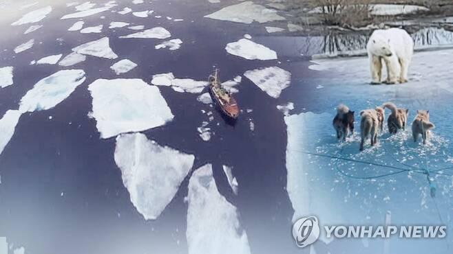 """""""북극이 녹고 있어요"""" 동물들의 기후변화 경고 (CG) [연합뉴스TV 제공]"""