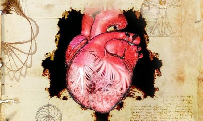 레오나르도 다 빈치가 스케치한 심장과 섬유주 [Spencer Phillips 제공 / 재판매 및 DB 금지]