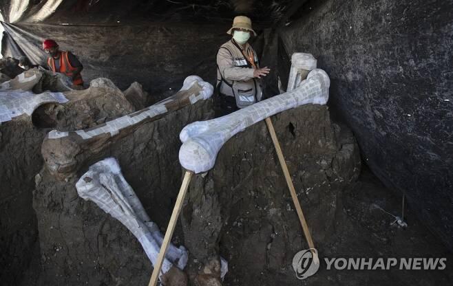 멕시코시티 공항 건설현장에서 발굴된 매머드 뼈 [AP=연합뉴스]