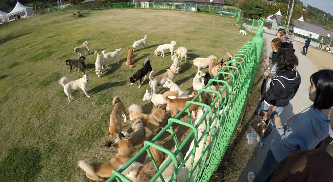 전북 군산에 위치한 군산유기동물보호소의 모습. 전국에서 유기동물이 오는 이곳에는 최근 유기동물 수가 예년보다 더 늘었다. [사진제공=군산유기동물보호소]