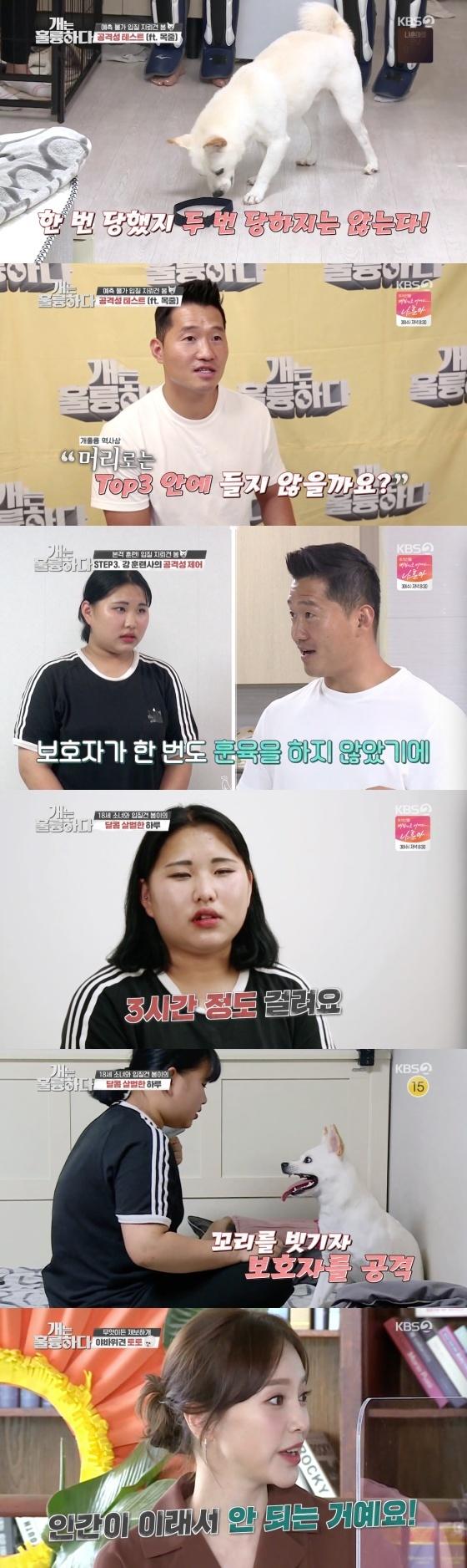 /사진=KBS 2TV 예능 프로그램 '개는 훌륭하다' 방송화면 캡쳐
