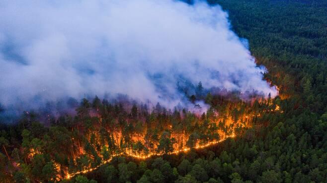 지난 7월 러시아 시베리아 숲의 나무 사이로 붉은 화염과 하얀 연기가 퍼져나가고 있다. 로이터=연합뉴스