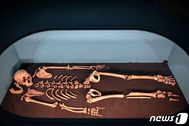 프랑스 한 박물관에 전시된 네안데르탈인 뼈© AFP=뉴스1