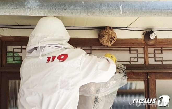 119 구급대원이 벌집을 제거하고 있다./뉴스1