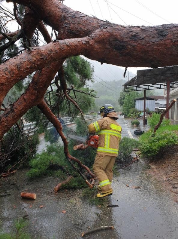 지난달 7일 태풍 하이선의 강풍에 대구 달성군 현풍읍 지리의 한 도로 옆 나무가 쓰러져 소방대원들이 안전조치를 하고 있다. 대구소방안전본부 제공.