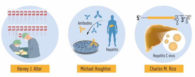 C형 간염 바이러스에 관한 수상자 3명의 연구를 나타낸 그림. 노벨위원회 제공