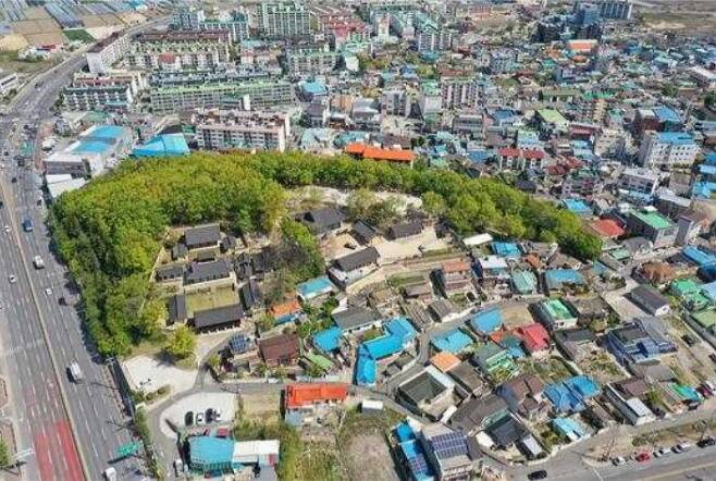 포항 흥해향교 이팝나무 군락 전경.(문화재청 제공)© 뉴스1