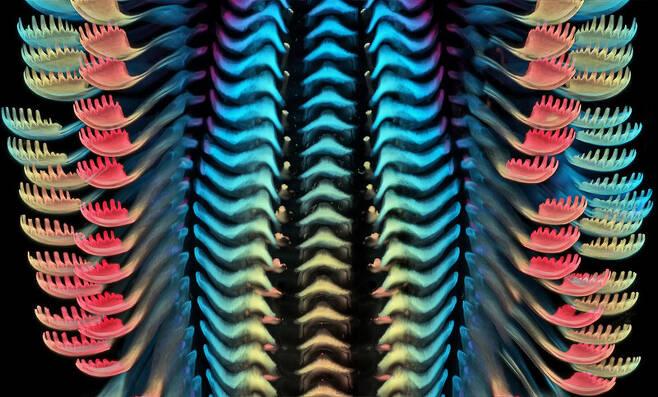 3위작 민물달팽이의 혀. 40배율 사진이다. 2020 Nikon Small World Photomicrography Competition