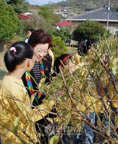 2008년 10월 8일 공생원을 방문한 오부치 지즈코(小淵千鶴子) 여사가 매화나무를 바라보며 감회에 젖고 있다. 이 나무는 2008년 4월 남편 오부치 게이조(小淵惠三) 당시 일본 총리가 공생원에 기증했다. [연합뉴스 자료사진]