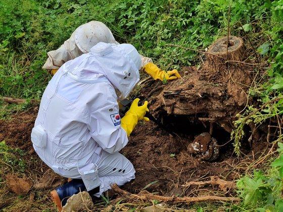 지난 9월17일 인천 중구 영종도의 야산에서 기자와 전문가가 장수말벌집을 제거 작업을 벌이고 있다. 남궁민 기자