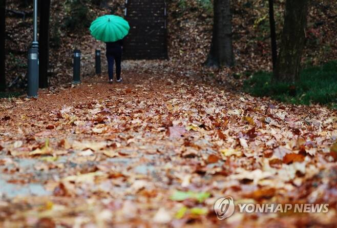 낙엽 적시는 비 지난 19일 오전 낙엽이 지는 광주 북구 전남대학교 교정에 겨울을 재촉하는 비가 내리고 있다. [연합뉴스 자료사진]