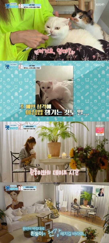 KBS 2TV '펫 비타민' 방송 화면 캡처 © 뉴스1