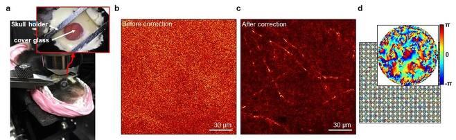 반사행렬 현미경으로 쥐의 신경망 관찰 [IBS 제공. 재판매 및 DB 금지]